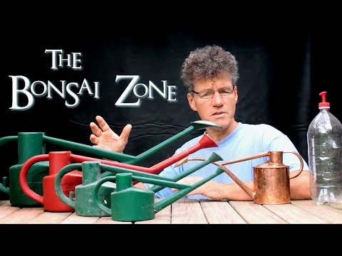 The Bonsai Zone, Money Tree and Aerial Root Ficus Update, Aug 2017