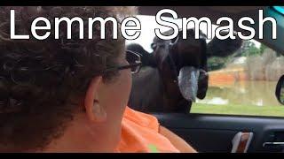 Lemme Smash - Animals Scaring People
