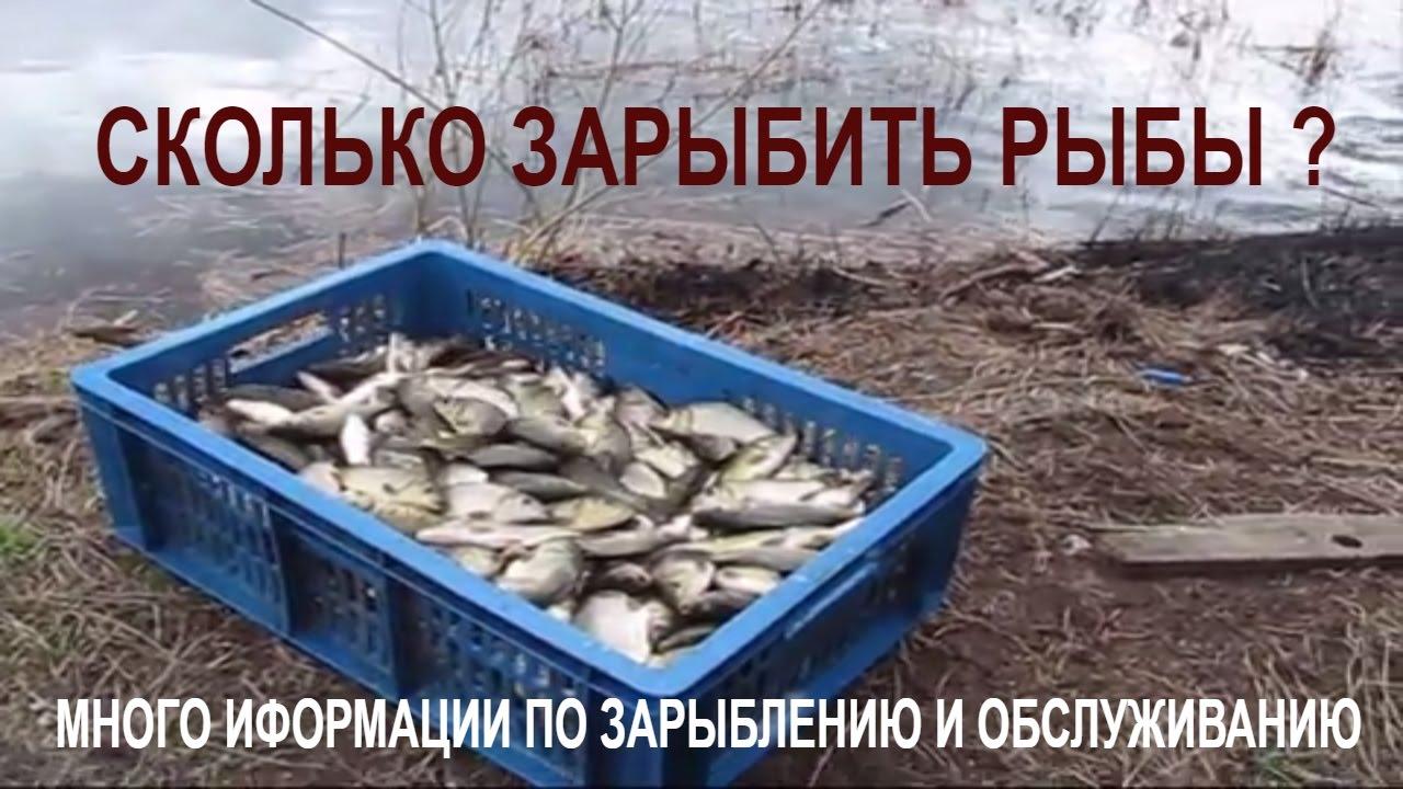 Зарыбление карася. Сколько и как правильно зарыбить рыбу в пруд