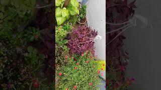 Gardening | Healthy lifestyle