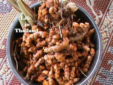 Turmeric Harvest 2013 - Only 1 Plant