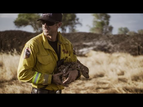 UPDATE: Evacuations Expand, Homes Burn As Fawn Fire Near ...