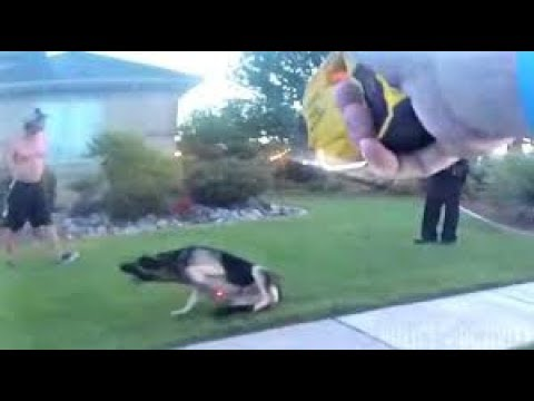 Bodycam Shows Utah Cops Use Taser on Attacking Dog