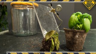 Growing Plants In A Vacuum! Does it work?!