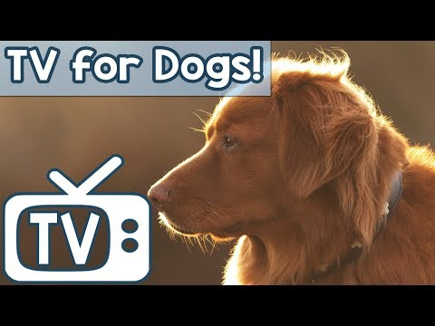 TV for Dogs: The BEST Dog TV to Help Calm Your Dog! Soothing Squirrels And Birds in Nature Footage!
