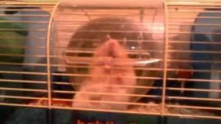 веселые хомячки вскрывают клетку за 5 секунд!!