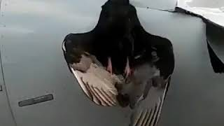 Airbus a320 birdstrke | Столкновение с птицей а320