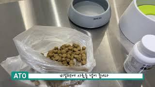 강아지 유산균 비니백 플러스 급여 방법