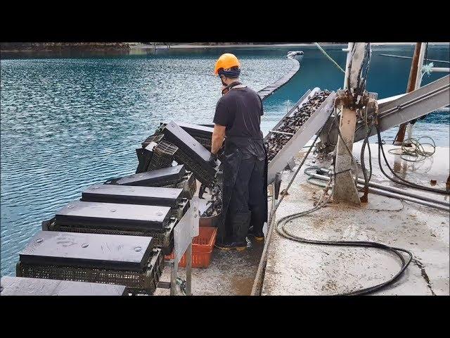 FlipFarm oyster system - harvesting
