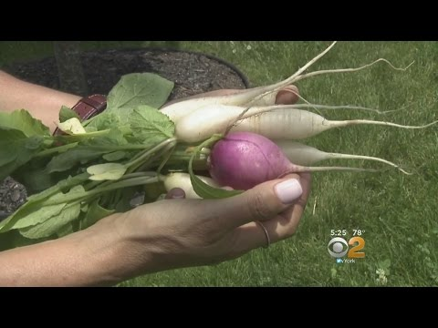 'Front Lawn To Table' Movement Turning Heads On Long Island
