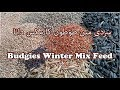 Budgies Parrots Winter Mix  Feed | Winter Mix Seeds  Urdu/ Hindi