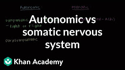 hqdefault - Difference Between Peripheral And Autonomic Neuropathy
