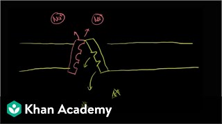 Correction to sodium-potassium pump video | Health & Medicine | Khan Academy