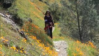 Hite Cove April Fool Hike 4 18