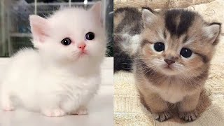 Baby Cats - Cute and Funny Cat Videos Compilation #7 | Aww Animals