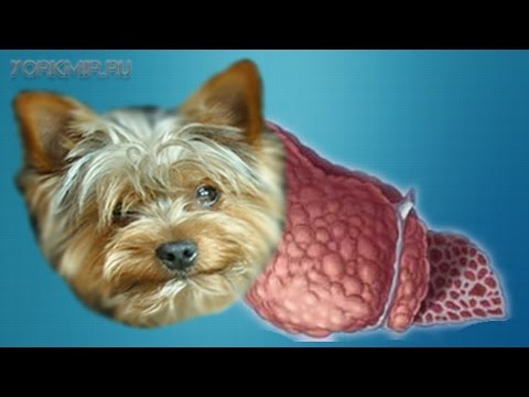 Печень болит у собаки