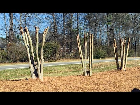Making It Grow - Crape Myrtle Discussion
