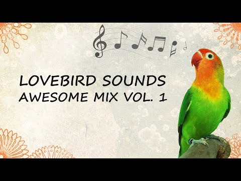 Lovebird Sounds - Awesome Mix Vol. 1