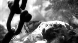 """""""В глубинах моря"""". Научно-популярный фильм. 1939 год."""