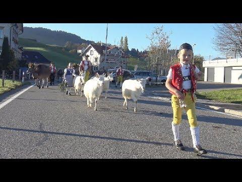 Viehschau Hundwil  14.10.2017