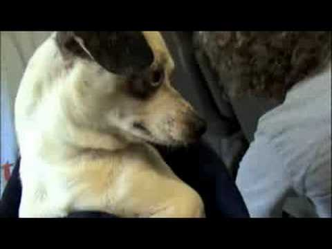 Hearts United for Animals Nebraska Rescue Part 2