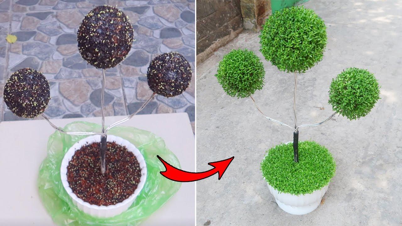 Brilliant idea, How to grow a unique bonsai tree from dragon fruit