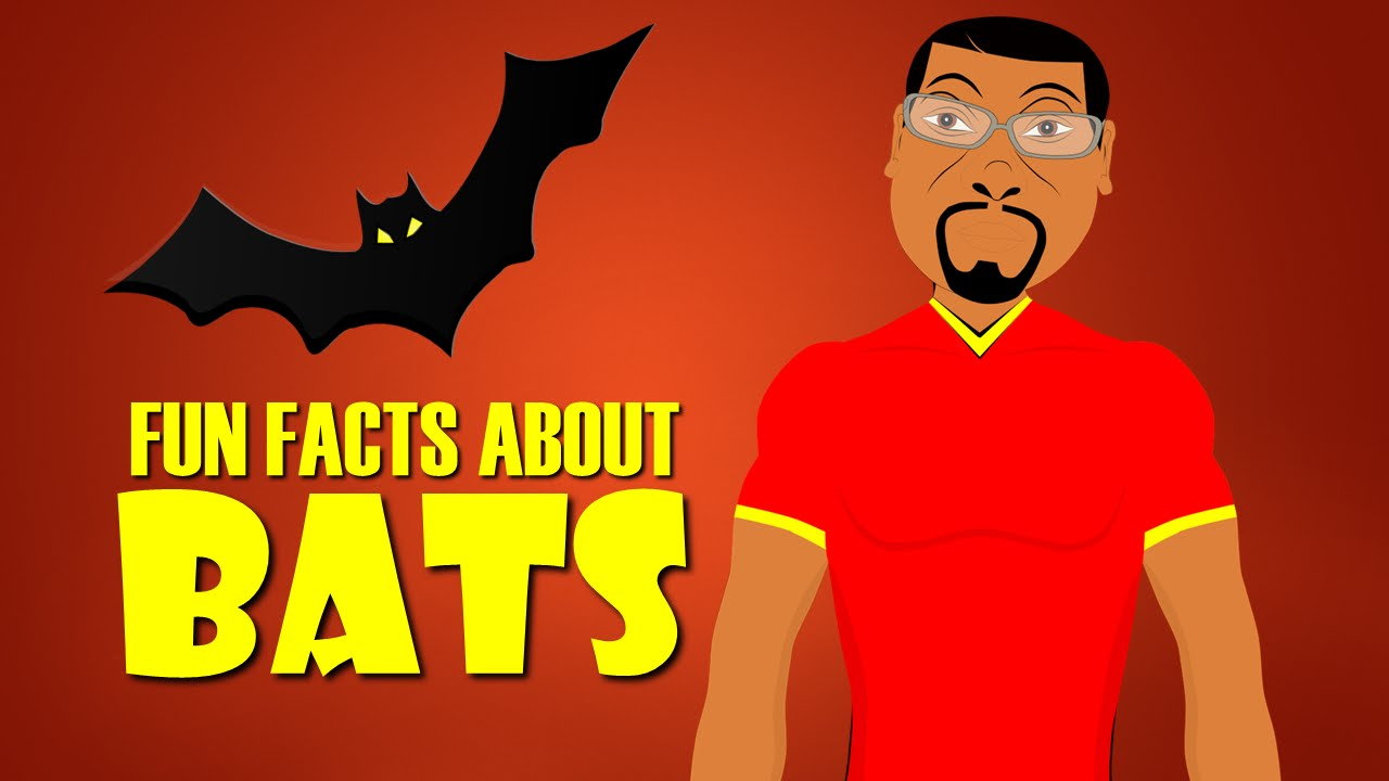 Fun Facts About Bats For Kids Learn With This Educational Cartoon Microchiroptera You