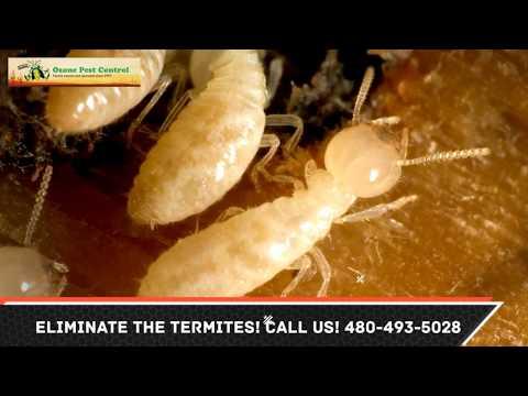Termite Control Goodyear AZ 480-493-5028 Ozone Pest Control