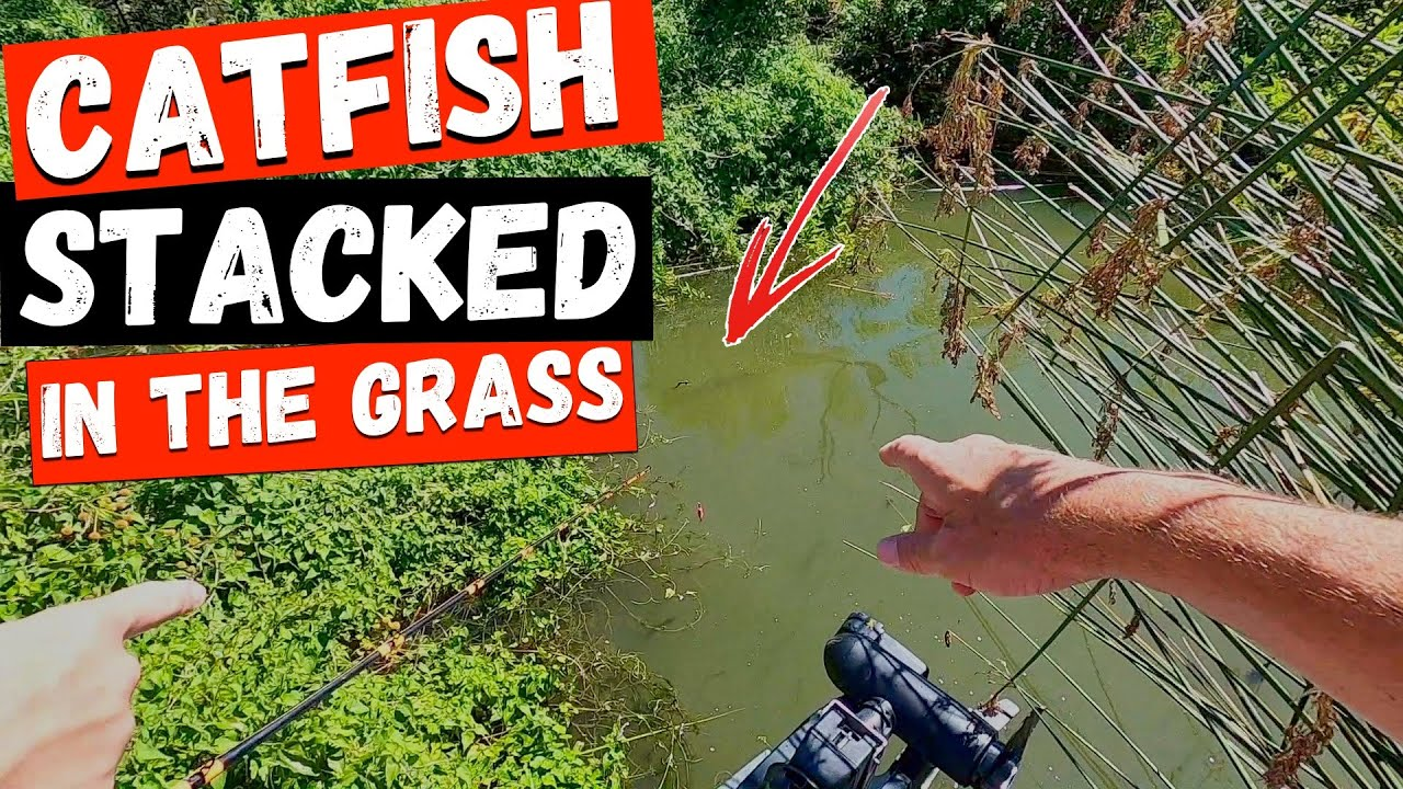 Catching Catfish STACKED In the Grass (Nasty Surprise Fish)