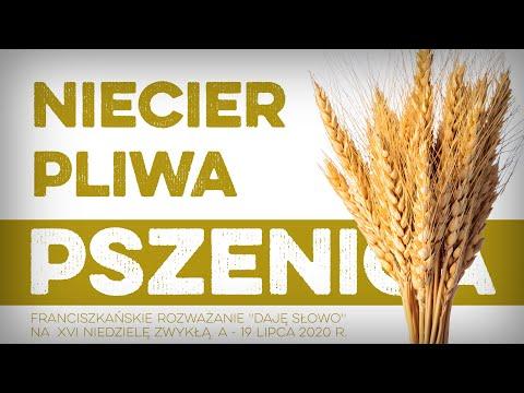 Niecierpliwa pszenica: Daję Słowo - XVI niedziela A - 19 VII 2020