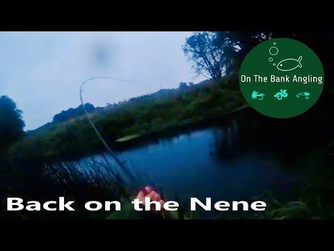 Back On The Nene - Rolling Meat For Barbel