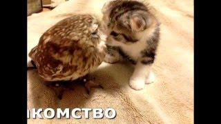 Общение животных, взаимопомощь, благодарность, поддержка