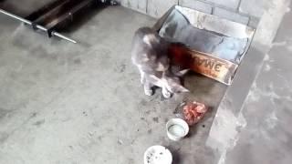 Кошка ловит мышь и съедает