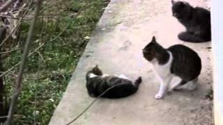 Секс Крымских мартовских котов