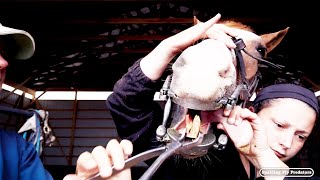 Highlights of Floating Horse Teeth with Equine Veterinarian Doc Jenni