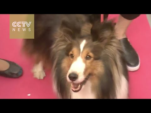 Beijing festival highlights the boom in China's pet care industry