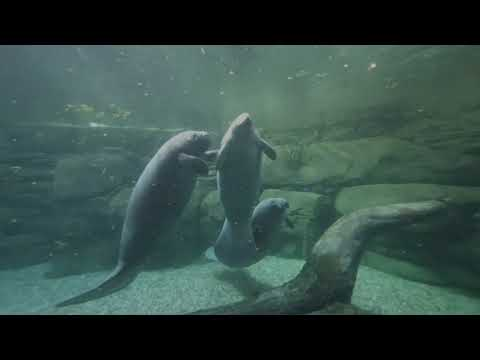 Short trip to the Cincinnati Zoo to test my 3D camera VR180
