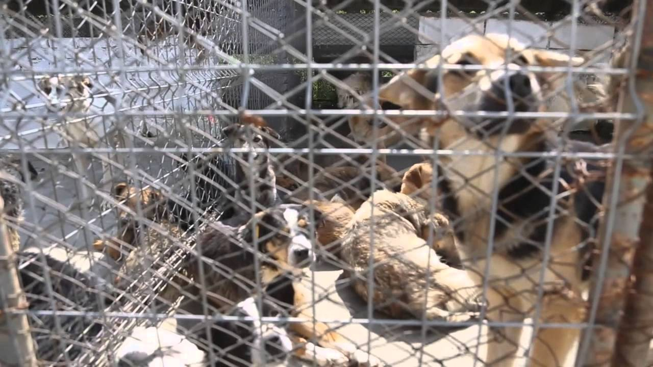 Shocking video reveals appalling conditions in Romanian dog