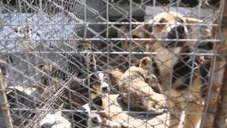 Shocking video reveals appalling conditions in Romanian dog shelters