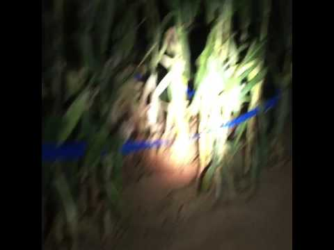 Flashlight Night LIVE preview at Maize Quest Corn Maze: Expedition Everest