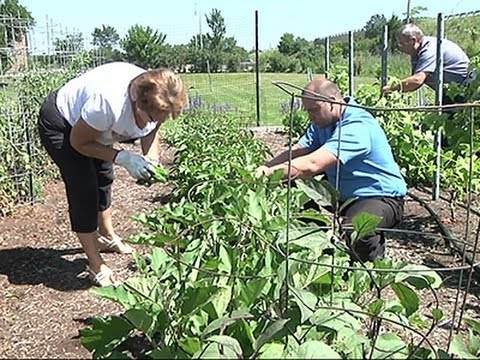 Corporate Gardens Promote Healthier Workplace