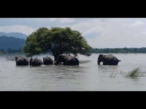 Assam flood: 66 deaths, over 35 lakh people still affected in 3,376 villages