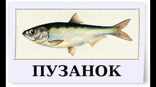 Русская - ли Рыбалка 4 ? (18+) очередная попытка ..... закрыть на 93 76 + новые настройки OBS