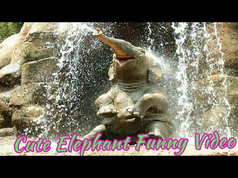 Cute baby elephant | a cute and funny baby elephant fight with Bird