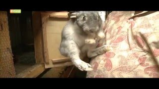 Smart Farm: Rabbits raring