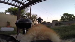 Gopro Fetch Dog Harness Mount - Dog Chase Video