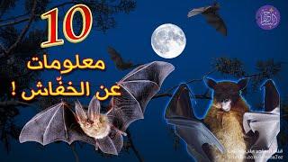 10 معلومات لا تعرفها عن الخفاش 🦇