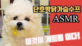 단호박닭가슴수프 ASMR / 밥먹다 자는 강아지 &am…