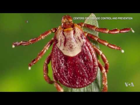 Disease Carrying Tick Population Exploding After Mild Winter