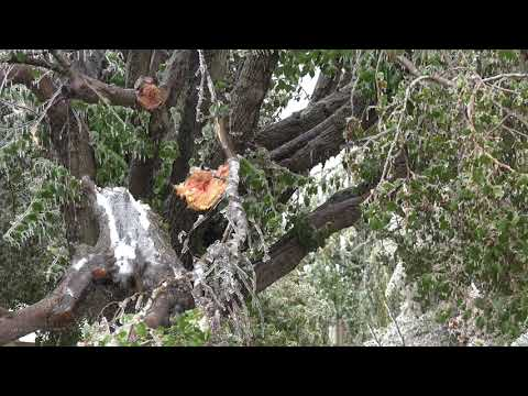 10-27-2020 Oklahoma City, OK - Ice Storm Causes Major Damage, Clean Up And Car Crashes